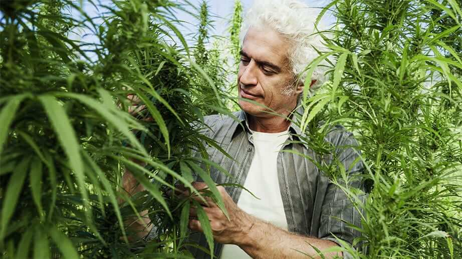 sativa gold about us man with hemp plants image