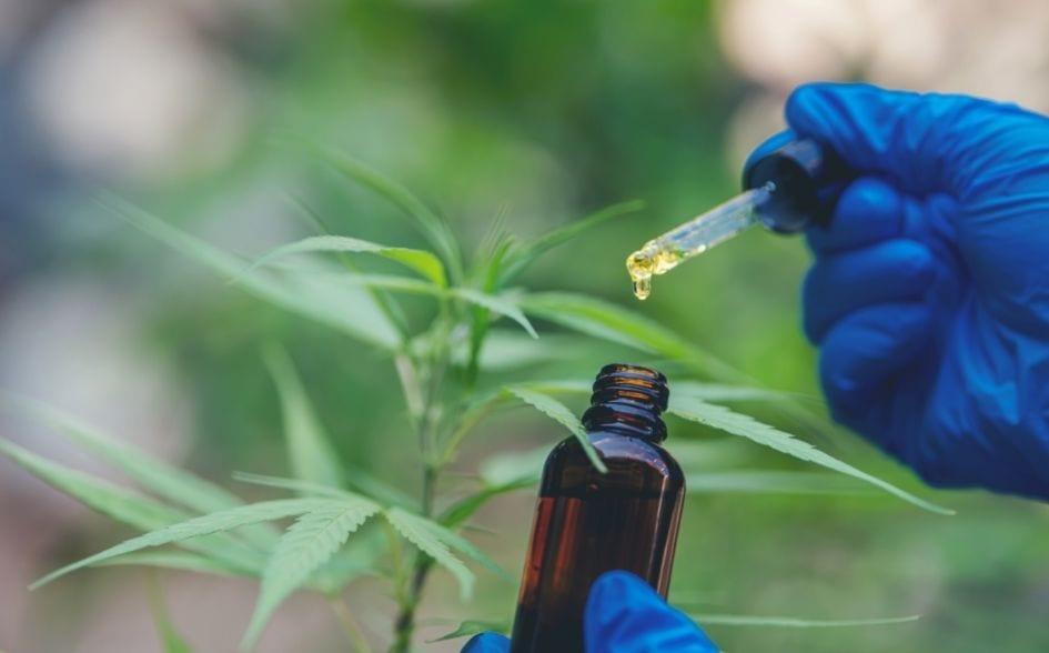 cannabis vs hemp oil